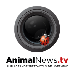 AnimalNews-Logo